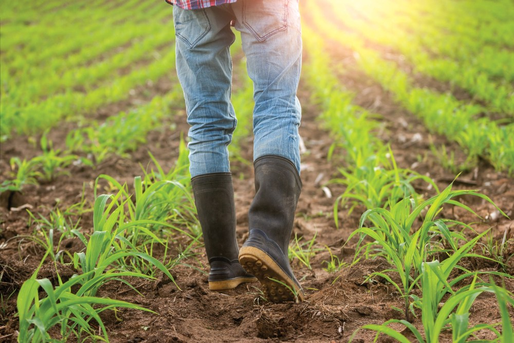 Best Farm Boots Review: A Comprehensive Buying Guide